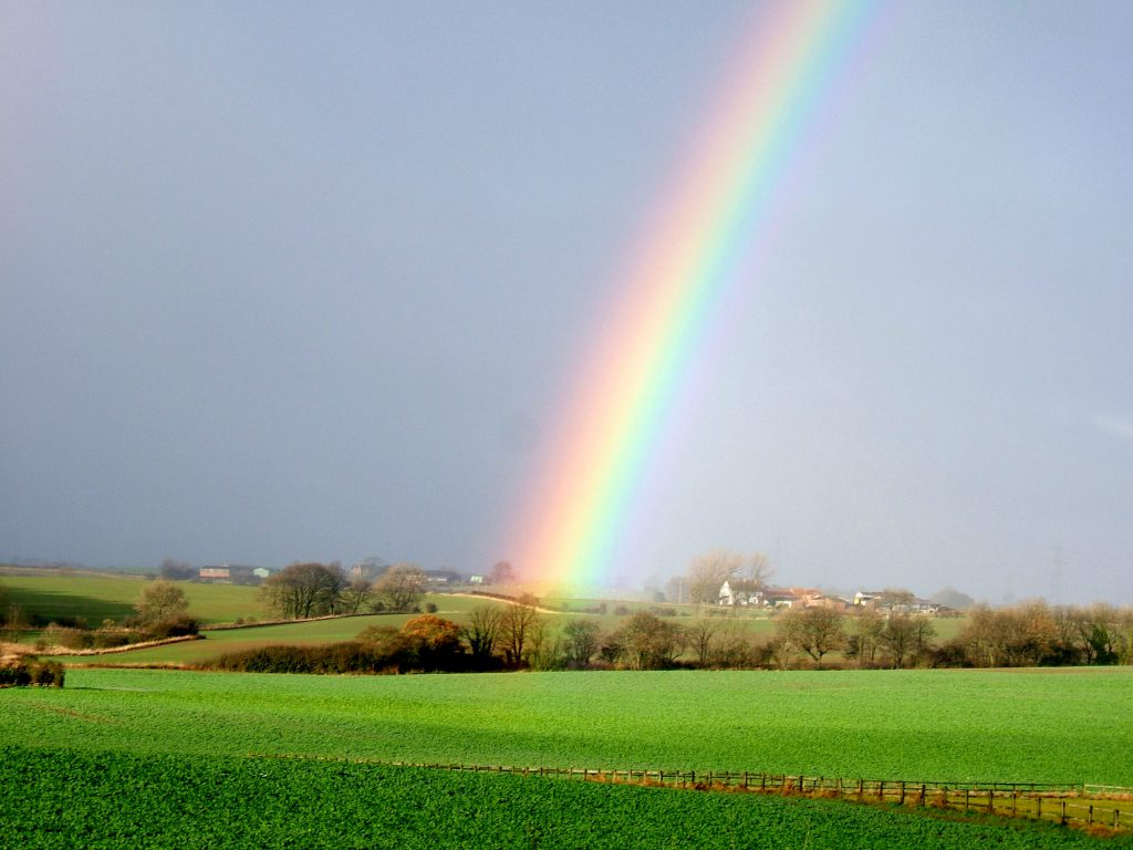 Rainbow in the field opposite Tom Walker and Sons